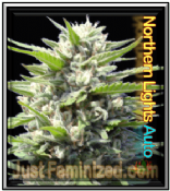Just feminized Seeds Bank Auto northern lights cannabis Strain